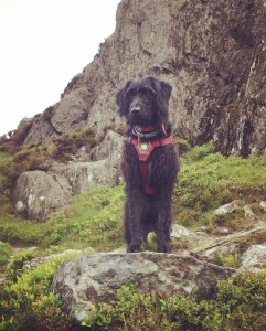 Hettie! The best mascot scrambling climbing dog...of course